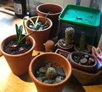 Indoor gardening, urban gardening, milan, italty